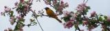 Stewardship Saturdays: invasivespecies