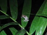 UMass Tropical Ecology: Puerto Rico 2014